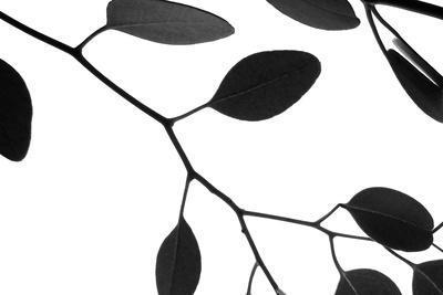 https://imgc.artprintimages.com/img/print/lunaria-honesty-iii_u-l-q11ucp00.jpg?p=0