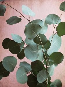 Sage Eucalyptus No. 1 by Lupen Grainne