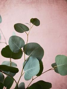 Sage Eucalyptus No. 2 by Lupen Grainne