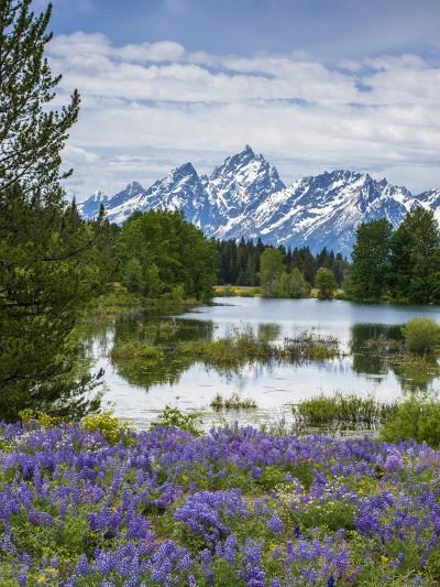Lupine Flowers with the Teton Mountains in the Background-Howie Garber-Photographic Print