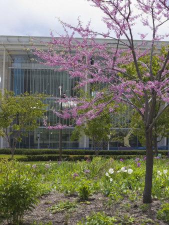 Lurie Garden and Art Institute of Chicago, Millennium Park, Chicago, Illinois, USA-Amanda Hall-Photographic Print