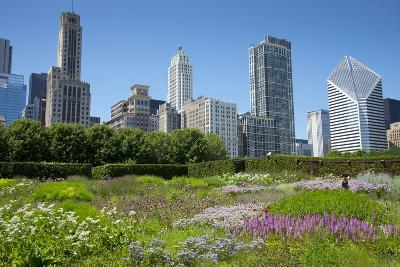 Lurie Garden in Millennium Park, Chicago, with Michigan Avenue Skyline-Alan Klehr-Photographic Print