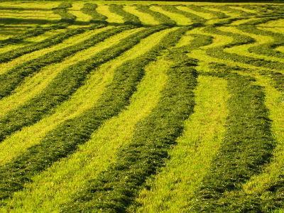 Lush Green Field Background--Photographic Print
