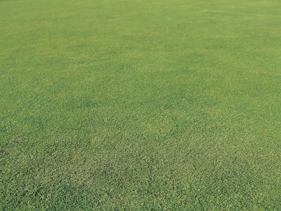 Lush Green Grass--Photographic Print