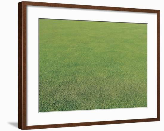 Lush Green Grass--Framed Photographic Print