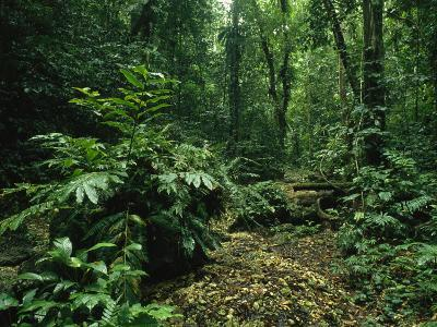 Lush Woodland View in Papua New Guinea-Klaus Nigge-Photographic Print