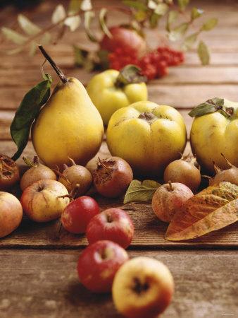 Autumn Fruits: Quinces, Medlars, Rowan Berries, Apples & Pears