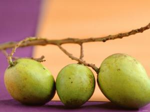 Three Green Mangos on a Branch by Luzia Ellert
