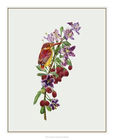 https://imgc.artprintimages.com/img/print/lycium-barbarum-ii_u-l-f8swgx0.jpg?p=0