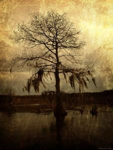 Cypress by Lydia Marano