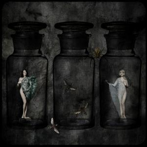 The Collector by Lydia Marano