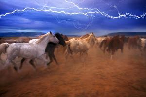 Horse Stampede by Lyle Leduc