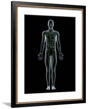 Lymphatic System, Artwork-SCIEPRO-Framed Photographic Print