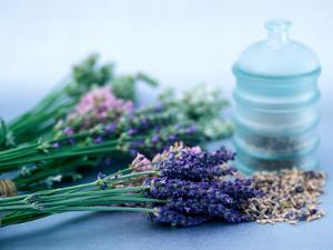 Cut Lavender, Dried Lavender & Glass Pot by Lynn Keddie