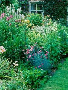 Large Cottage Style Garden, with Colourful Herbaceous Borders by Lynn Keddie