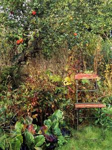 Red Bandstand Chair Under Old Apple Tree, October by Lynn Keddie
