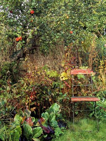 Red Bandstand Chair Under Old Apple Tree, October