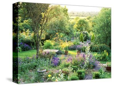 View into Country Garden with Blue and Pink Colour Plants Summer