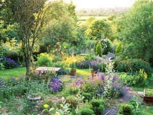 View into Country Garden with Blue and Pink Colour Plants Summer by Lynn Keddie