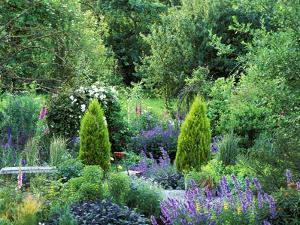 View into Country Garden with Perennials and Small Trees Summer by Lynn Keddie