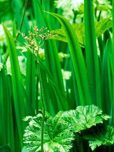 Wiltshire Bog and Woodland Garden with Pond and Lush Foliage by Lynn Keddie