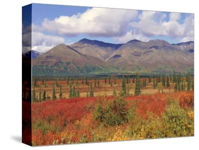 Tundra Landscape in Autumn, Denali National Park, Alaska USA