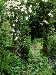 Archway with Clematis Montana (Grandiflora Alba) and Rosa (Sombreuil) by Lynne Brotchie
