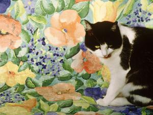 Black and White Cat Sitting on a Floral Chair by Lynne Brotchie
