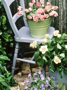 Blue Chair, Green & Blue Buckets Rosa (Peach & Apricot) Campanula by Lynne Brotchie