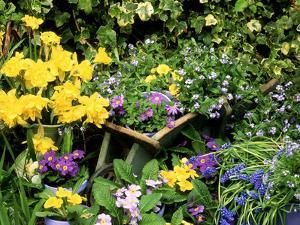 Daffodil, Primrose, and Grape Hyacinth by Lynne Brotchie
