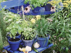 Herbs in Painted Pots by Lynne Brotchie