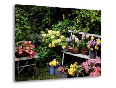 Hyacinth, Bluebell, Daffodil