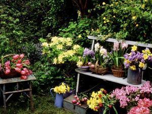 Hyacinth, Bluebell, Daffodil by Lynne Brotchie