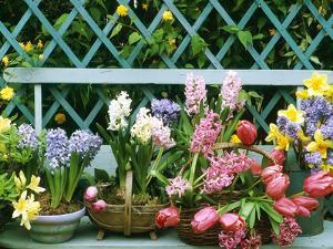 Hyacinth, Tulip, Squill, Daffodil and Azalea by Lynne Brotchie