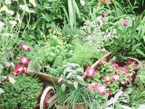 Parsley, Sage, Basil, Dill, Fennel, Tarragon, Rosemary, Chives, Thyme Oregano, Bay, Petunia by Lynne Brotchie