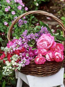 Rosa, Solanum and Larkspur Summer Flowers in a Basket on a White Stool in the Garden by Lynne Brotchie