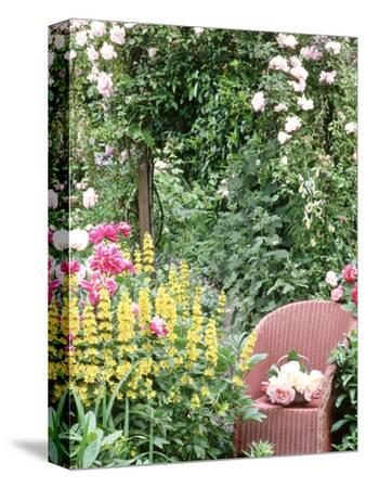 "Rose Arch, Chair Trug, Rosa ""Peace,"" Lysimachia Punctata, Rosa ""Albertine"""