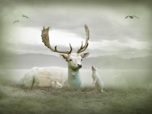 The White Stag by Lynne Davies