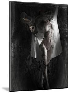 Yakilium by Lynne Davies