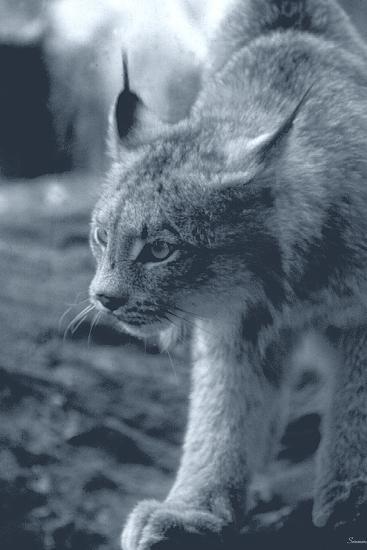Lynx-Gordon Semmens-Photographic Print