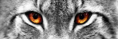 Lynx-PhotoINC-Photographic Print