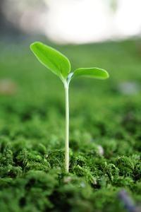 Plant by lyo