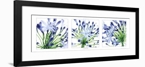 Lys du Nil-Guillaume Plisson-Framed Art Print