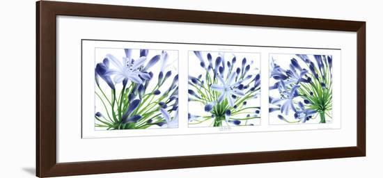 Lys du Nil-Guillaume Plisson-Framed Art Print