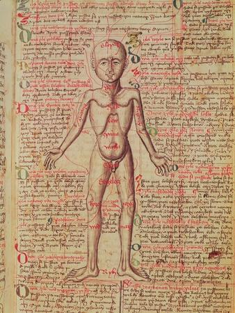 Anatomy of the Human Body, from 'Tractatus De Pestilencia'