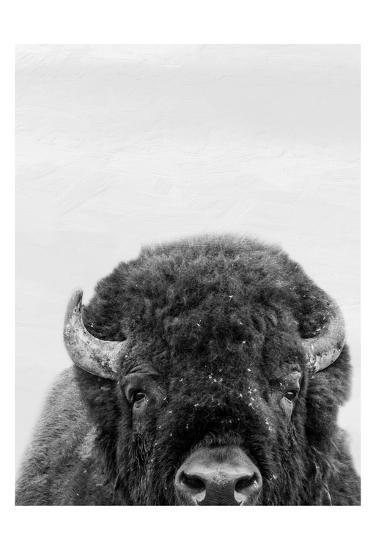 M Bison-Marcus Prime-Art Print