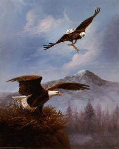Eagle Nesting by M^ Caroselli