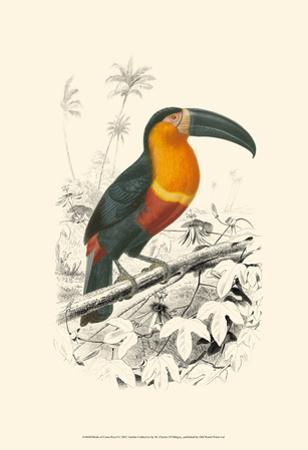 Birds of Costa Rica I