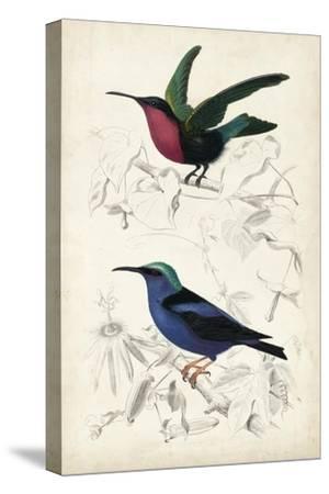 D'Orbigny Birds I