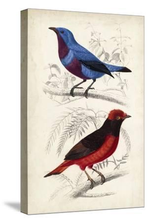 D'Orbigny Birds II